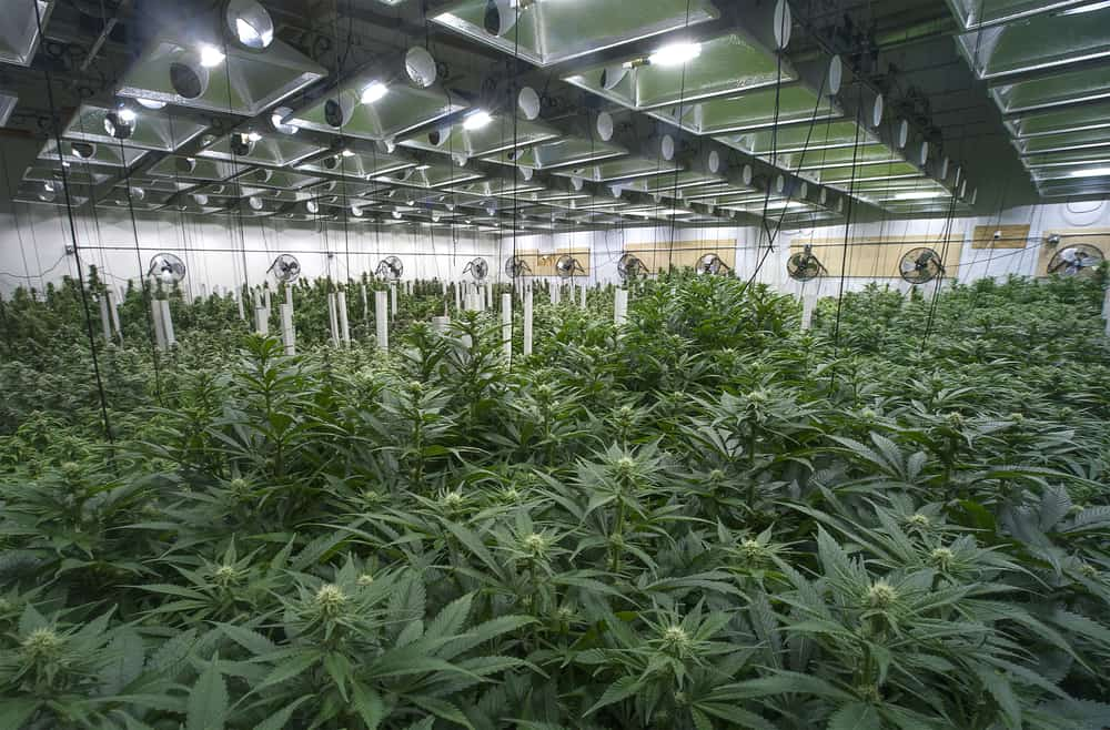 marijuana impacting industrial real estate